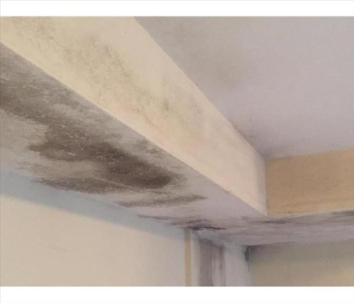 Mold in a Wrightsville Beach Condo