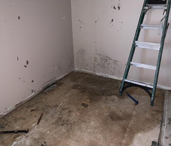 Room with mold on walls and pry bars on the floor
