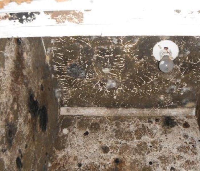 Mold Remediation New Hanover Residents: Follow These Mold Safety Tips If You Suspect Mold