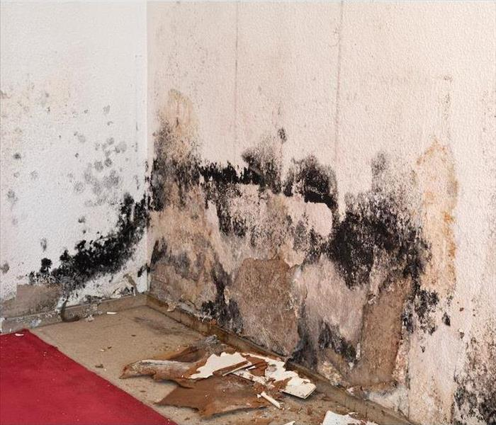 Mold Remediation Finding Mold Damage in Your Wrightsville Beach Summer Home