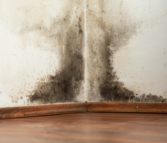 Mold Remediation What to Expect When You Hire a Mold Damage Professional