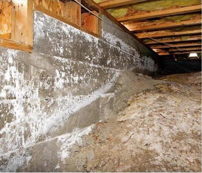 crawlspace with concrete wall and wood rafters above