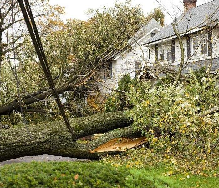 Large trees fallen and resting on homes causing damage.